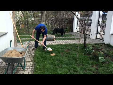 Как правильно посеять (восстановить) газон (траву) после зимы