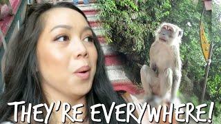 MONKEYS ARE EVERYWHERE! - April 06, 2017 -  ItsJudysLife Vlogs