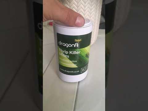 My Favourite Product For Spider Mite. Predator Mites Ambyseius Natal Organic Way To Get Rid Of Them