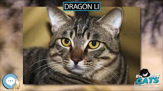 Dragon Li  EVERYTHING CATS