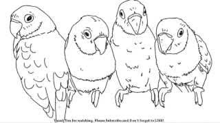 How to Draw Love Birds or Parakeets