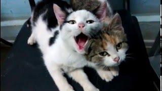 Котята на тех осмотре Балаково.