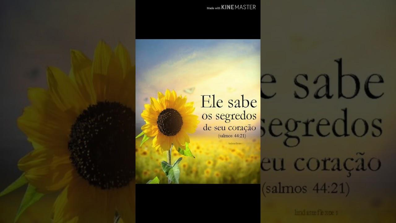 Frases De Reflexão Música Neste Vídeo Bruna Karla Cicatrizes Youtube
