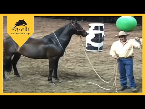 Parelli Natural Horse Training Tip  What Is Respect?