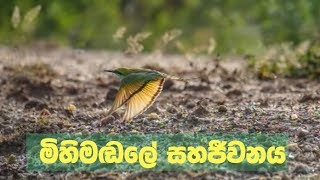 Doramadalawa -  මිහිමඬලේ සහජීවනය (2018-08-27) | ITN Thumbnail