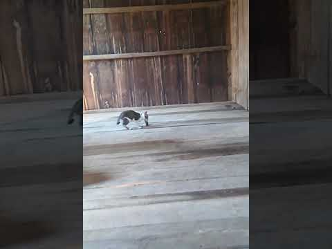 Rural Animals, Cats escaped with the mouse. Date : 13/02/19