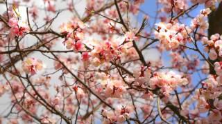 Муданцзян (Китай): краски весны!