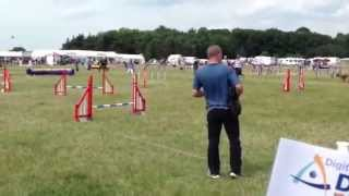 Derby Dog Training Club - Jumping Combined 5 To 7