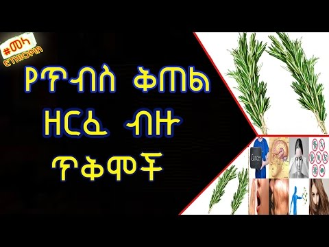 ETHIOPIA - የጥብስ ቅጠል ዘርፈ ብዙ ጥቅሞች | Health Benefits of Rosemary in Amharic