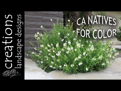 Top 3 California Native Plants For Color