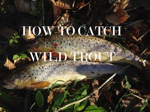 How To Catch Trout In Small Rivers.
