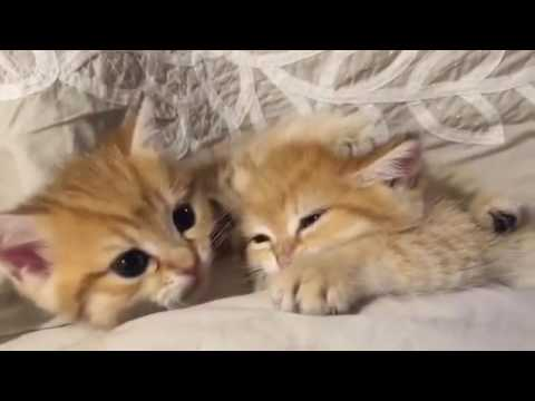 two cute cat kittens playing with each other