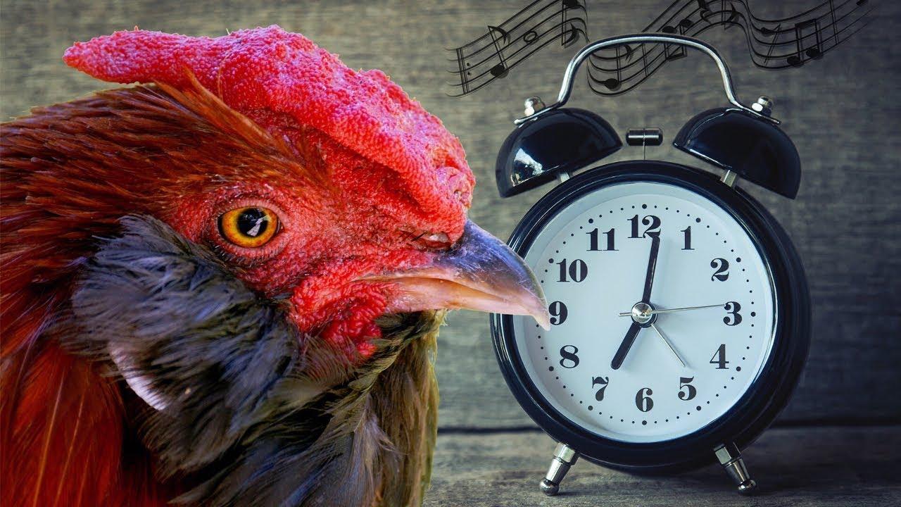 Настольные часы и будильники   magazilla все интернет-магазины украины в крупнейшем каталоге сравнения товаров и цен. Покупай настольные часы и будильники по лучшей цене. Прайсы более 1000 магазинов.
