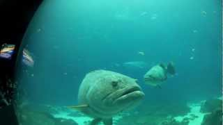 Fish in Captivity: Wildlife of the South Pacific and Atlantic!