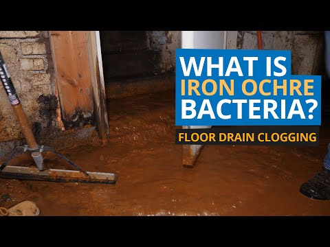 What is Iron Ochre Bacteria? Basement Drainage Clogged