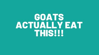 Grasses and shrubs that goats eat: What it takes to feed goats