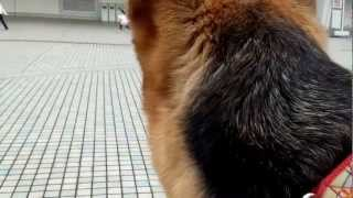 2013年2月2日、ナゴヤドームで開催されたわんにゃんドーム201...