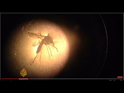 WHO: Zika virus may spread to Europe