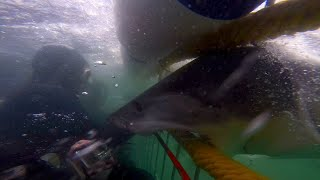 Dive In To Shark Week With The 13 Best Shark Videos | SHARK WEEK