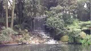 Cascada del Jardín Botánico de Bogotá José Celestino Mutis