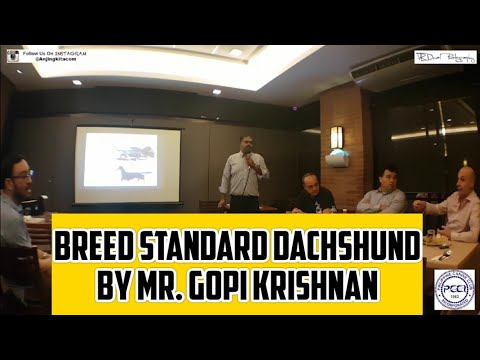 Breed Standard Dachshund by Mr. Gopi Krishnan