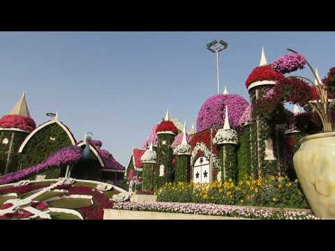 Dubai Miracle Garden – November 2018