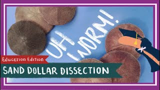 Sand Dollar Dissection || Doves of Peace [EDU]