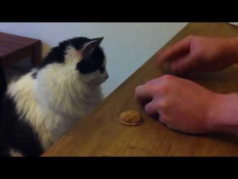Watch Super Smart Cat .. She Found Me In A Shelter – Smart Cat