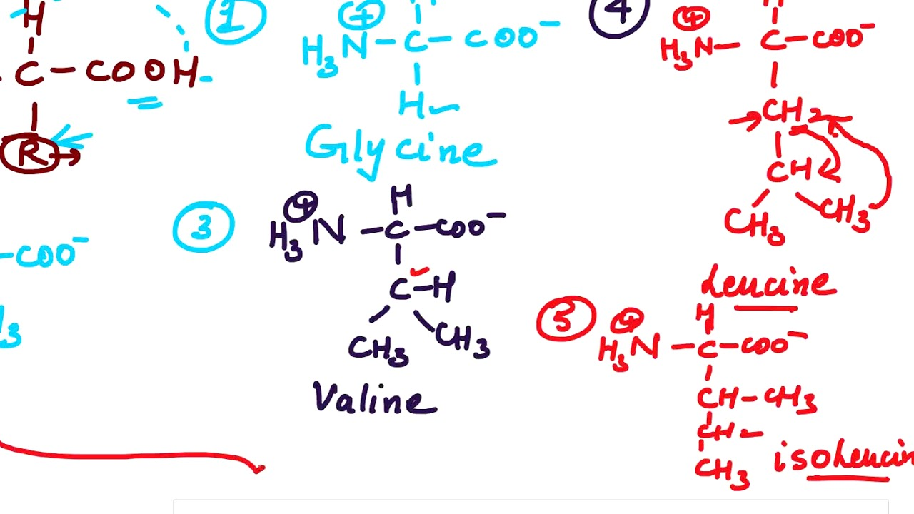 Class 12 Biomolecules: trick to remember essential amino acid and its structures