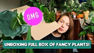 Massive rare houseplant unboxing prepare for emotional roller coaster