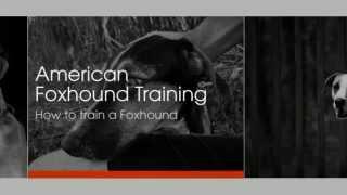 American Foxhound Training