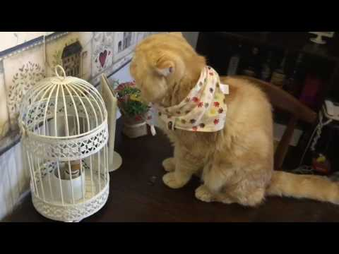 Cafe with cats in China/ Qingdao/ Chinese cats ~