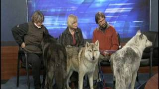 Mission: Wolves visit Syracuse 2011