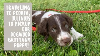Traveling to Peoria, Illinois to pick up our Dogwood Brittany Puppy