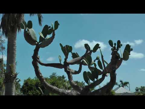 tour of St. George Village Botanical Gardens on St. Croix, U.S. Virgin Islands (1 of 2)