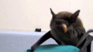 Ryan The Bat