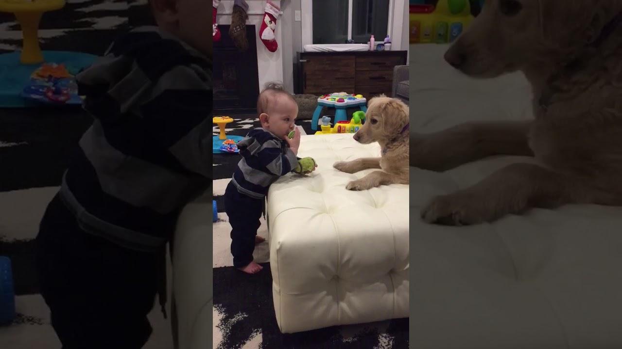 Baby Giving A Dog Wrong Gift
