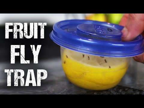 "How To Make a ""Lemon Fresh"" Fruit Fly Trap"