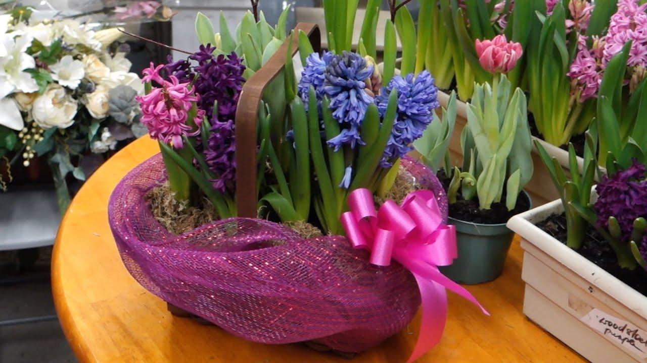 Arranging spring flowering bulb basket youtube arranging spring flowering bulb basket mightylinksfo