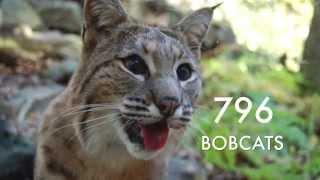 Why did the US Gov. Kill 2.7 Million Wild Animals?