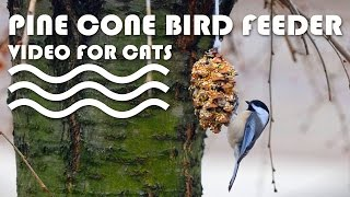 Entertainment Video For Cats. Pine Cone Bird Feeder.