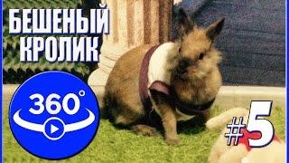 Бешеный кролик. Видео 360 градусов.(Видео 360 градусов