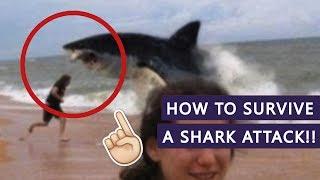 HOW NOT TO GET EATEN BY A SHARK!