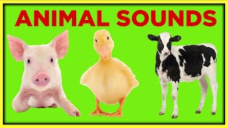 Farm Animal Sounds for Toddlers Toddler Learning Video Educational Speech Videos