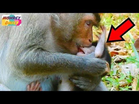 MG! Violet monkey bite her newborn baby Loni |Loni baby cry loudly |So pity baby |Monkey Daily 202