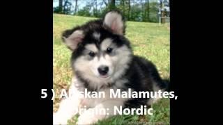 Top Ten - World's Most Dangerous Dogs [hd]