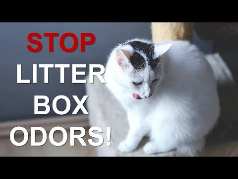 How To Keep Your Litter Box From Stinking Up Your House!! |Control Litter Box Odors