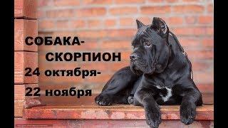 ВНИМАНИЕ ВЛАДЕЛЬЦАМ СОБАК! собака - Скорпион- ГОРОСКОП