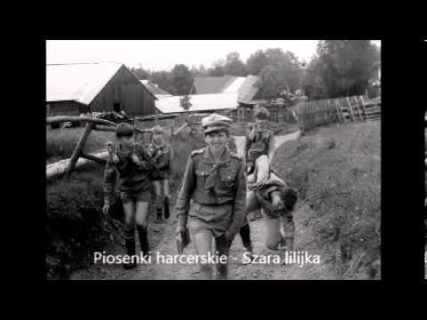 Szara lilijka - Gdy zakochasz się w szarej lilijce - TEKST - Piosenki harcerskie
