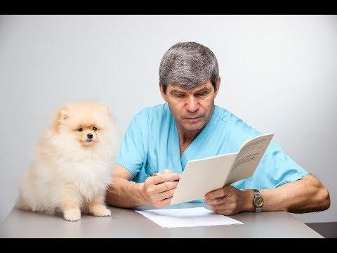 Ветеринарный врач Федор Меркулов. Прямой эфир от 4 августа 2019 года